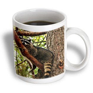 3Drose Oregon, Portland, Raccoon Wildlife In Conifer Tree, Jaynes Gallery, Ceramic Mug, 11-Oz