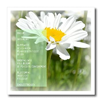 Daisy Flower Dream Poem Poems About Daisy Flowers