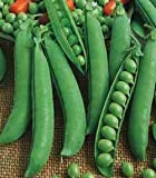 PEA - FELTHAM FIRST - FIRST EARLY - 300 SEEDS