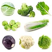Winter Exotic Cruciferous Vegetables Seeds Kit !! Cabbage, Broccoli, Swiss Chard, Brussels, Chinese Cabbage, Red...