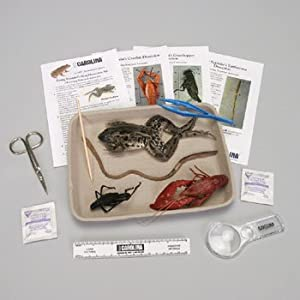 Young Scientist's Animal Dissection Kit