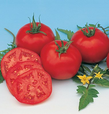 Slicing Tomato Moskvich D756A (Red) 25 Organic Heirloom Seeds by David's Garden Seeds
