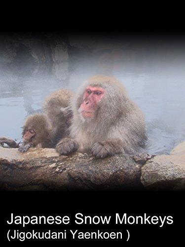 Clip: Japanese Snow Monkeys (Jigokudani Yaenkoen )