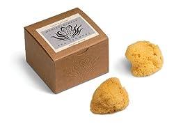 Silk Sea Sponges Gift Box