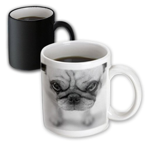 3Drose Pug Magic Transforming Mug, 11-Ounce