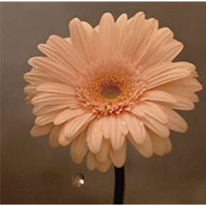 花は咲く 作詞:岩井俊二 作曲:菅野よう子