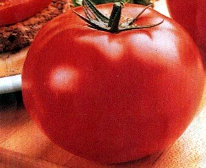 Big Beef Hybrid Tomato 45 Seeds -Colossal Fruit Size! (Hybrid Tomato Plants compare prices)