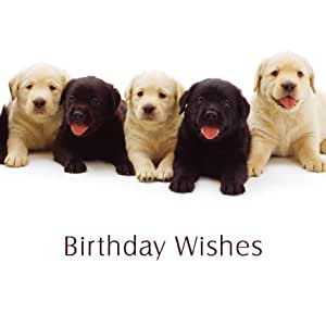 "Amazon.com - Black & Yellow Labrador Puppy Dogs ""Birthday Wishes"
