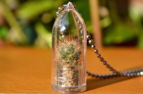 shining-knight-live-cactus-plant-necklace-cactus-terrarium-gift