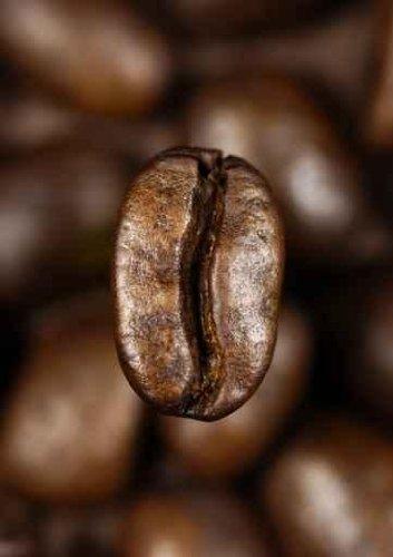 Single Coffee Bean - 18