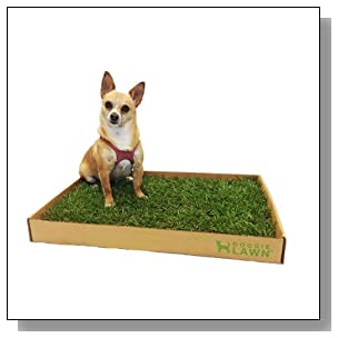 DoggieLawn Disposable Dog Potty - REAL Grass - SMALL 24x16