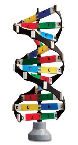 Neo Sci DNA Activity Model, 19