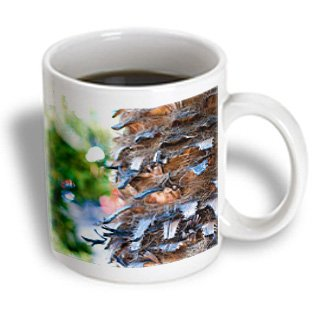 Jos Fauxtographee Realistic - A Close Up Of The Trunk Of An Old Palm Tree In Mesquite, Nevada - 11Oz Mug (Mug_61296_1)
