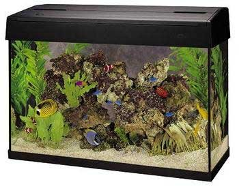 Eclipse 20 gallon fish tank offers a larger size for 37 gallon fish tank