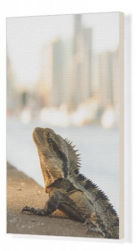canvas-print-of-city-lizard