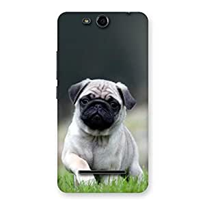 The Awesome Cuty Pug Dog Back Case Cover for Micromax Canvas Juice 3 Q392