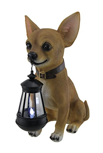 Buy Chihuahua Now!