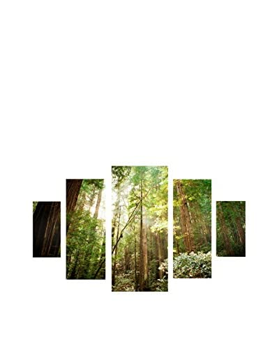 "Ariane Moshayedi ""Muir Woods"" 5-Panel Canvas Art Set, 40″ x 58″"