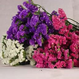 Statice Filler 10 Flowers Bunches