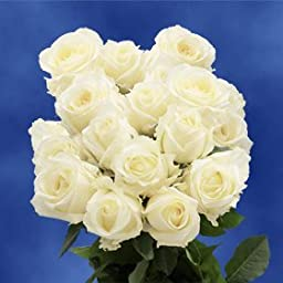 Roses For Anniversary | 50 White Roses