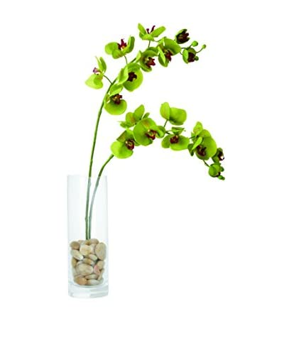 Torre & Tagus Orchid Single Stem, Olive Green