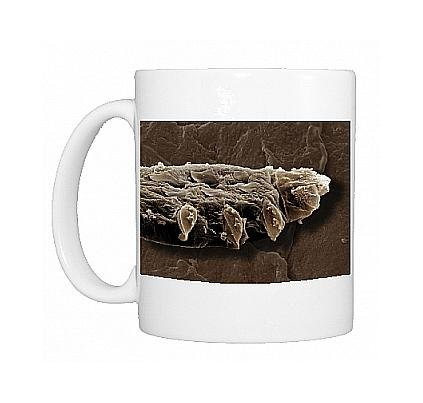 Photo Mug Of Scanning Electron Micrograph (Sem) Follicle Mite From Ardea Wildlife Pets