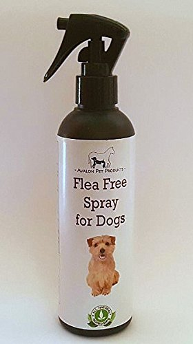 free-shipping-app-100-natural-flea-tick-spray-for-dogs