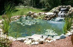 Water gardens and fish ponds infobarrel for Amazon fish ponds