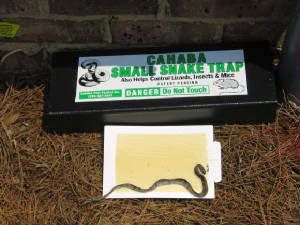 Amazon com 1 pk snake trap small with 3 catch inserts reusable