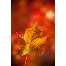 "Photos by Matt Dames MD3C36X24S Artwork #3 Single Leaf on Canvas, 36"" Length x 24"" Width, Stretched"