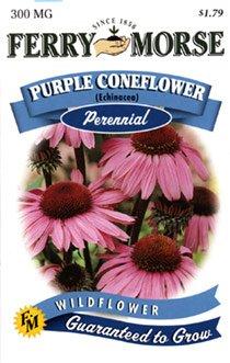 Ferry-Morse 1131 Purple Coneflower Perennial Flower Seeds (300 Milligram Packet)