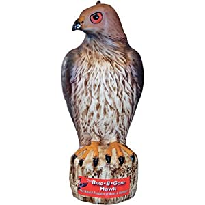 Bird-B-Gone Hawk Bird and Rodent Deterrent - 17in.H, Model# MMRTH1