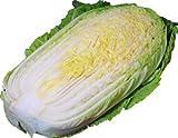 白菜【ハクサイ・はくさい】 1/2カット 芯の部分は細切りにしてサラダで! 【九州・大分・福岡産】