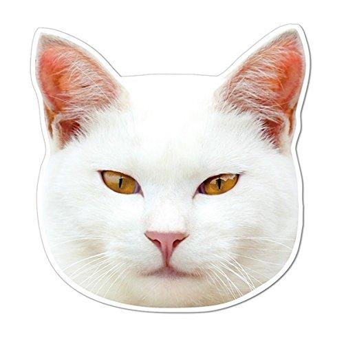 kmag 猫画像