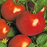 SeeKay Tomato 'St Pierre' 30 seeds French - late crop