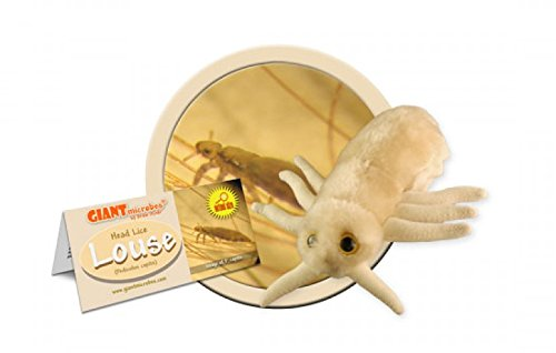giant-microbes-pediculus-capitis-louse-science-kit