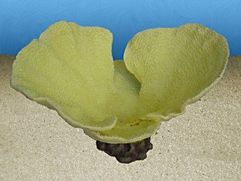 Nature's Image Artificial Corals: Bowl Turbinaria Yellow