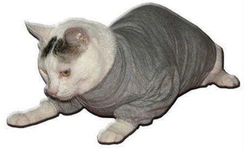 fashion-dog-cura-pets-body-copri-medicazione-39-cm