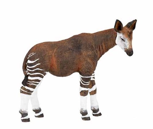Okapi Replica