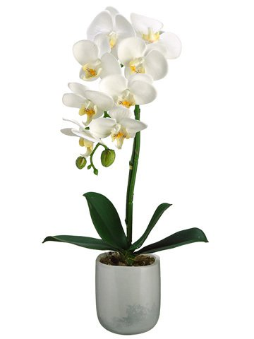 Topiary Flowers Orchid Moss /& Root in White Artificial