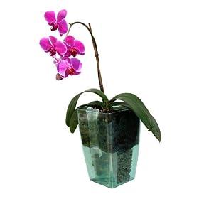 Schumm orchidea 1101531541 vaso autoirrigante con inserto for Vaso orchidea