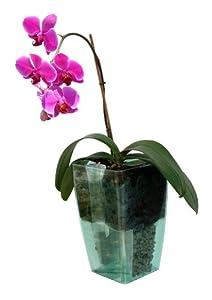 Schumm 1101531541 Selbstbewässerungstopf Orchidea mit Einsatz und Zubehör, transparent