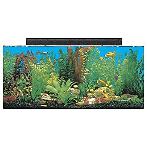 Amazon.com : SeaClear Rectangular Aquarium Combo (Clear) : Pet ...