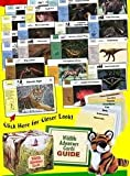 img - for Wildlife Adventure Cards book / textbook / text book