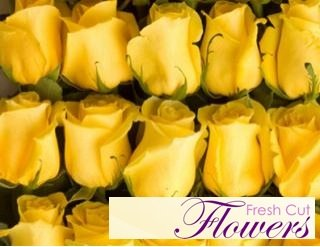 150 Yellow Long-stem Roses From South America (Wholesale) | 26-inch Stems | 150 Stems Per Order | Weddings, Banquets, or Birthdays