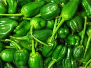 Pimientos De Padron Pepper Seeds 30 Seed Pack by OrganicSeedSupply