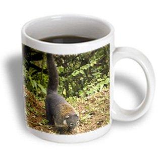 3dRose mug_87269_1 Costa Rica, La Paz Area, Coatimundi Wildlife Sa22 Rsp0004 Rob Sheppard Ceramic Mug, 11-Ounce