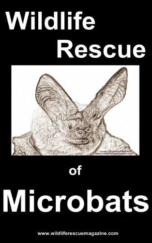 Wildlife Rescue of the Microbat