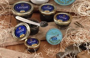 American-Caviar-Sampler-Gift-Set-Paddlefish-Bowfish-Hackleback-Russian-Blinis-and-Crme-Fraiche-Only-995-Overnight-Shipping