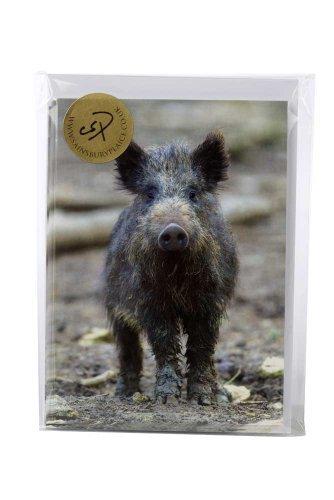 10-wildschwein-charles-sainsbury-schollen